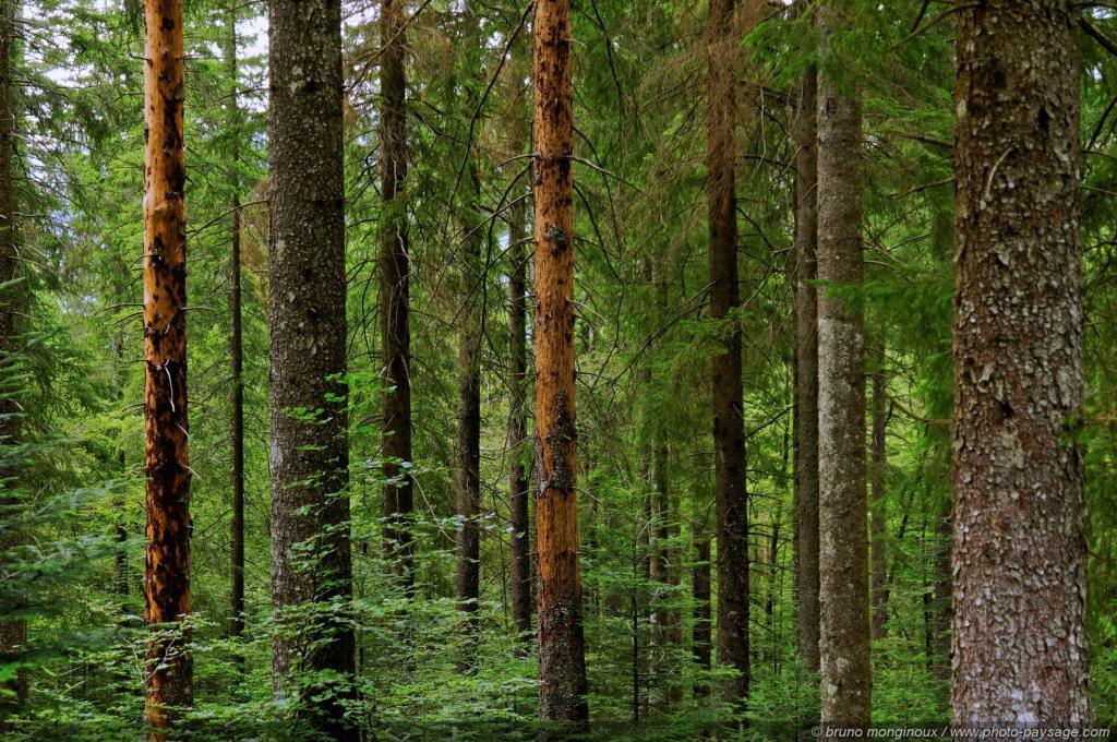 Esprit des bois